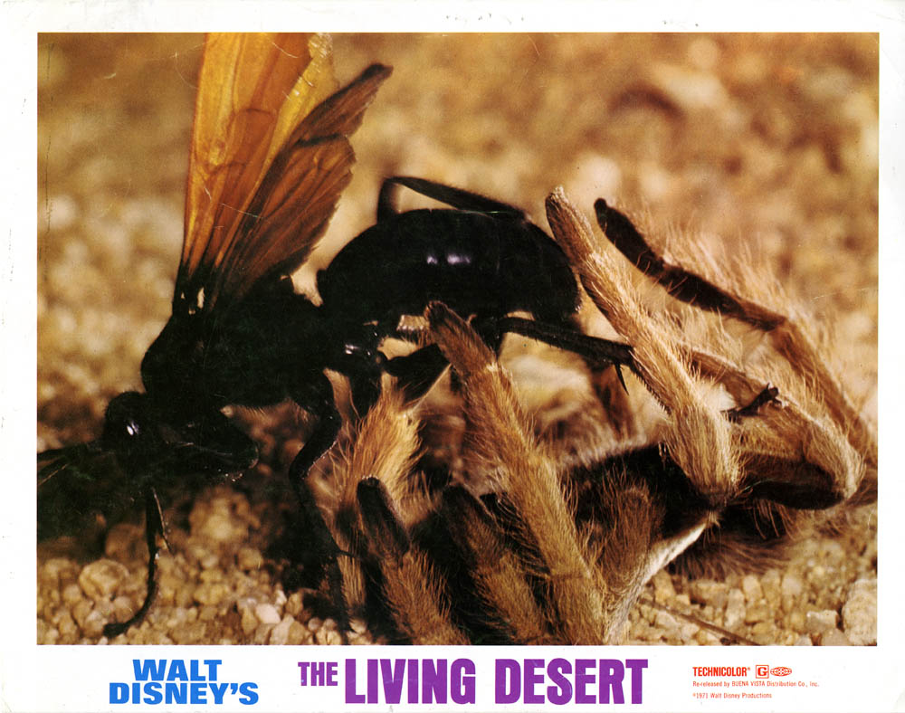 Walt Disney Presents, The Living Desert