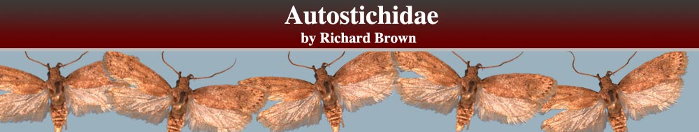 Autostichidae header