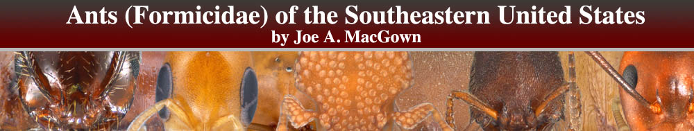 Ants (Formicidae) of the Southeastearn United States by Joe A. MacGown
