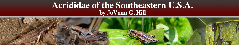 Acrididae of the Southeastern United States by JoVonn G. Hill