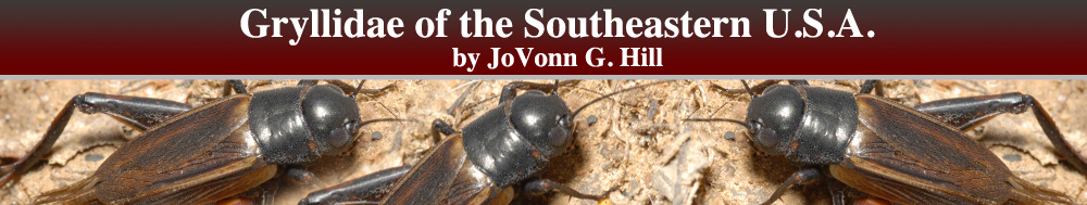 Gryllidae of the Southeastern United States