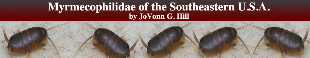 Myrmecophilidae of the Southeastern U.S.A.