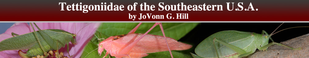 Tettigoniidae of the Southeastern United States