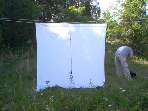 Blacklight Traps  Collecting Methods  Mississippi